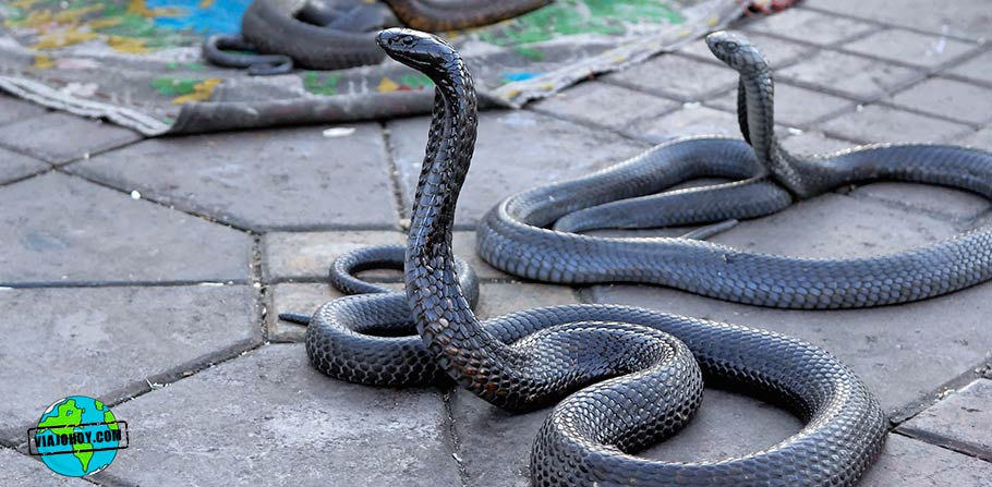serpientes-marruecos-viajohoy