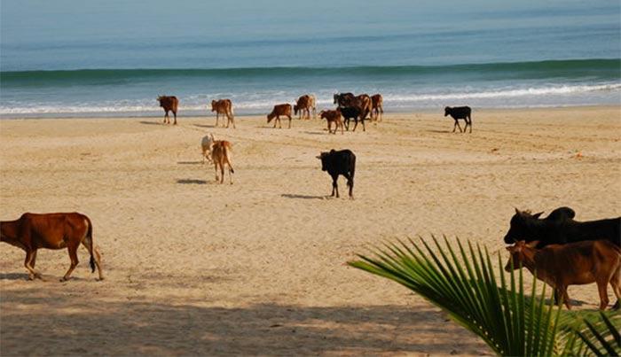 agonda-beach-india-2